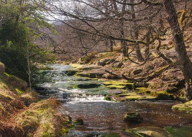 Birchen Bank Wood and Stream