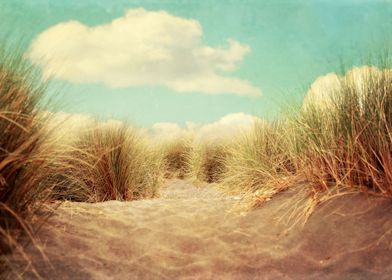 beach and dune grasses on the California coast