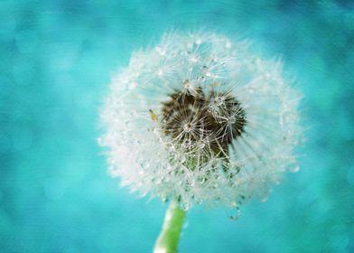 macro of a dandelion seedhead