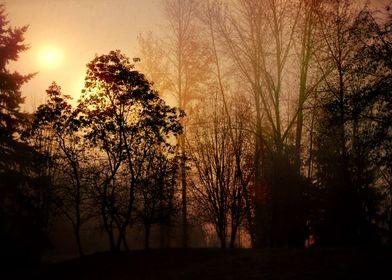 morning sunrise through the foggy trees