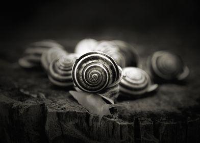 A Snail's World...