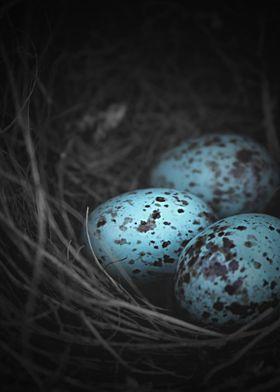 Nest of 3...