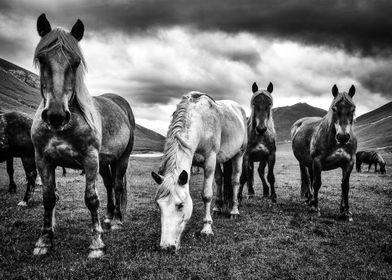 Horses in the Little Tibet, in Italy.
