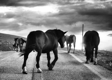 Some horses on the road.