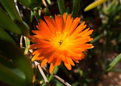 A macro take of an orange flower