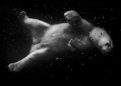 """""""Polar Bear Dream"""""""