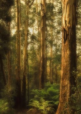 The Dandenong Ranges, Victoria. This was captured on t ...