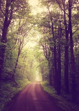 A foggy day is the perfect time to wander and explore w ...