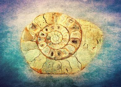 The Shell - Fibonacci (The Golden Spiral) in Nature. Te ...