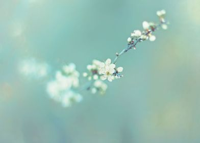 WHITE FLOWERBRANCH