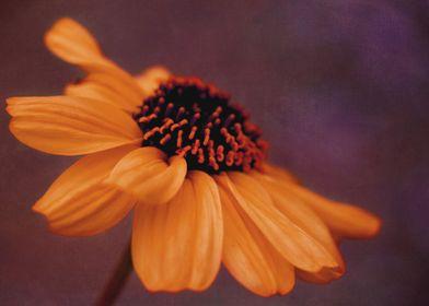 Fine art floral photography: 'The Sundress' by Irina Wa ...