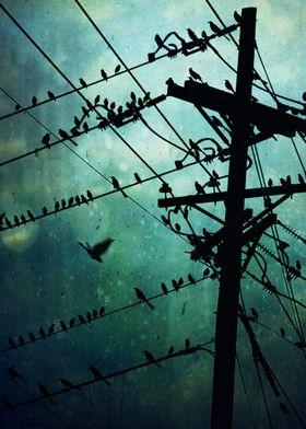 Bird City...