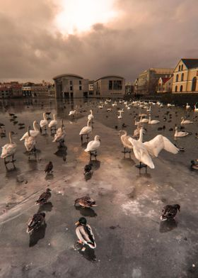 this photo is taken downtown Reykjavik, the city pond , ...
