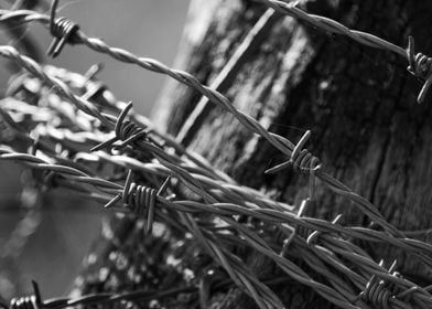 Barbed Wire Black
