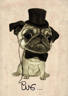 Pug. (Gentle pug).