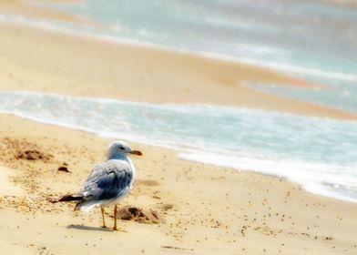 A lonely seagull on a Long Island Beach with aqua ocean ...