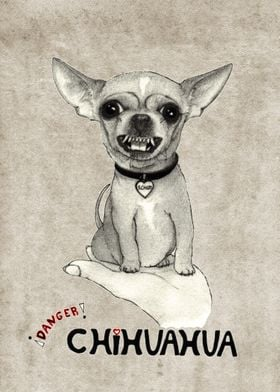 """Danger! Chihuahua. (""""schizo"""" the chihuahua)."""