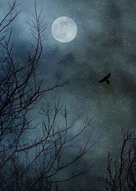 Winter's Silence...