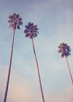 """""""Sunshine and Warmth"""" - Los Angeles, California Palm tr ..."""