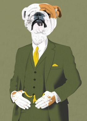 Refined English Bulldog