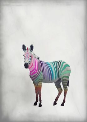 RAINBOW ZEBRA WHITE