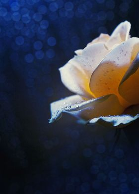 """""""Moonlight Dew"""" / Share some delicate moment of intimac ..."""