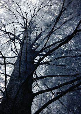 This image was taken with an infrared camera, this one  ...