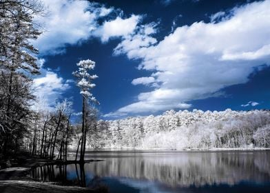 This was taken with an infrared camera at Paul M. Grist ...