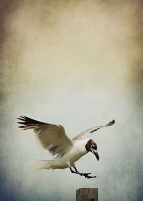A Seagull's Landing