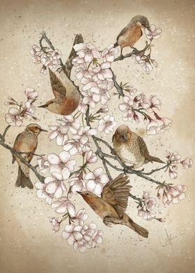 Too Many Birds