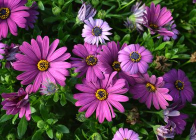 Purplish flowerty!