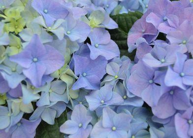 Blue flowers shine on sunny days