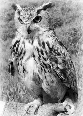 A Turkmanian Eagle Owl
