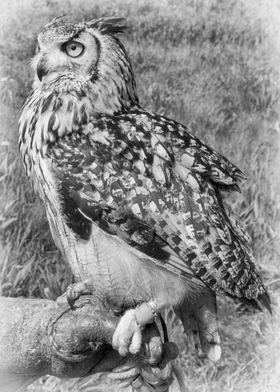 Bengali Eagle Owl. Taken in Suffolk UK