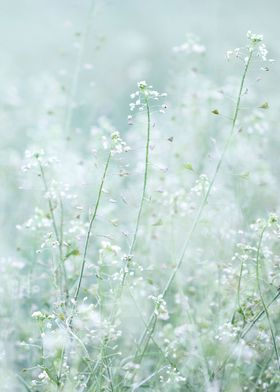 MORNING MEADOW PARADISE