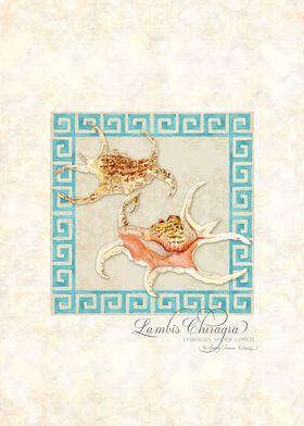 Greek Key Lambis Chiragra Conch Shells Watercolor - Han ...