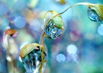 Rainbow Moss Drops
