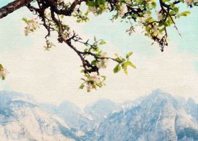 Apple Blossoms, Mountains