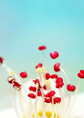 Blooming Candy Red