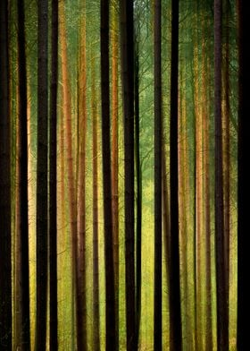 Tall Trees Abstract