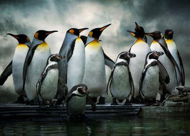 Penguins at Bourton