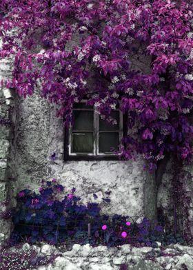 Orchid Vines