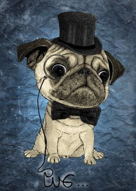 Pug; Gentle pug (color version)