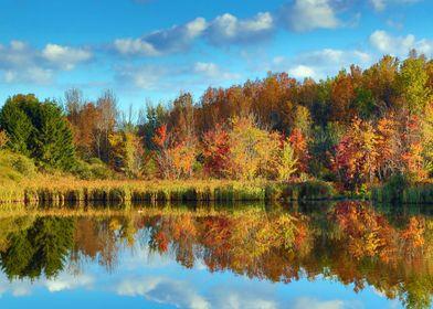 Autumn Reflectiond