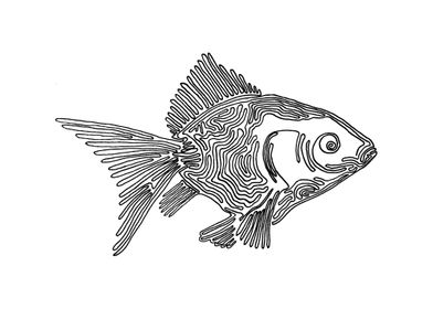 Goldfish, One Line Drawing The line starts in the eye ...