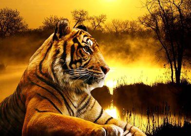 Sumatran Tiger and Sunset