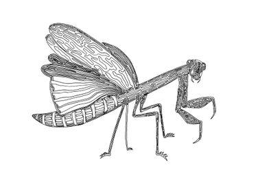 Mantis, One Liner