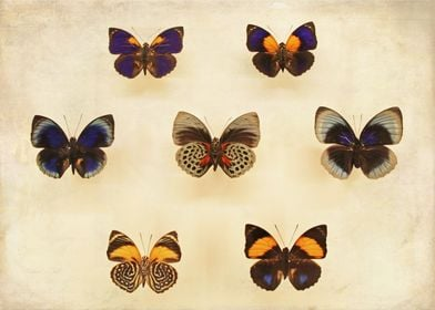 Vintage Butterfly Collecti