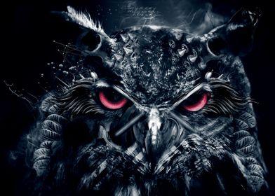 Dark owl (bruised but not beaten )