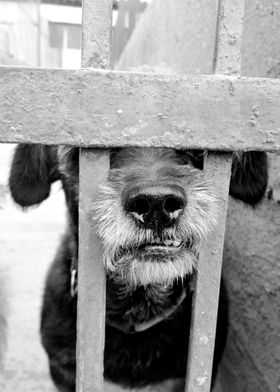 dogs behind bars #1